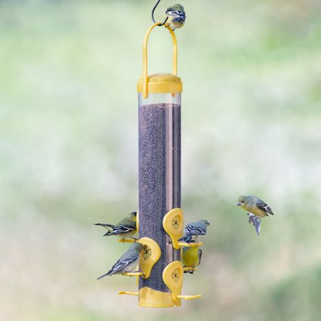 Six Upside Down Feeding Stations