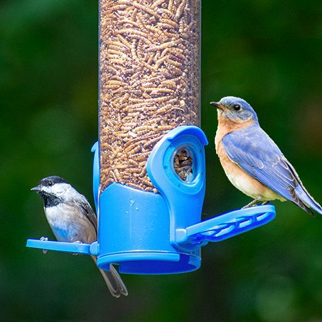 Perches Fit Small & Large Birds