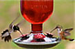 Hummingbirds Love Antique Feeders!
