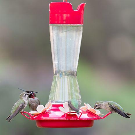 pinch waist top fill hummingbird feeder
