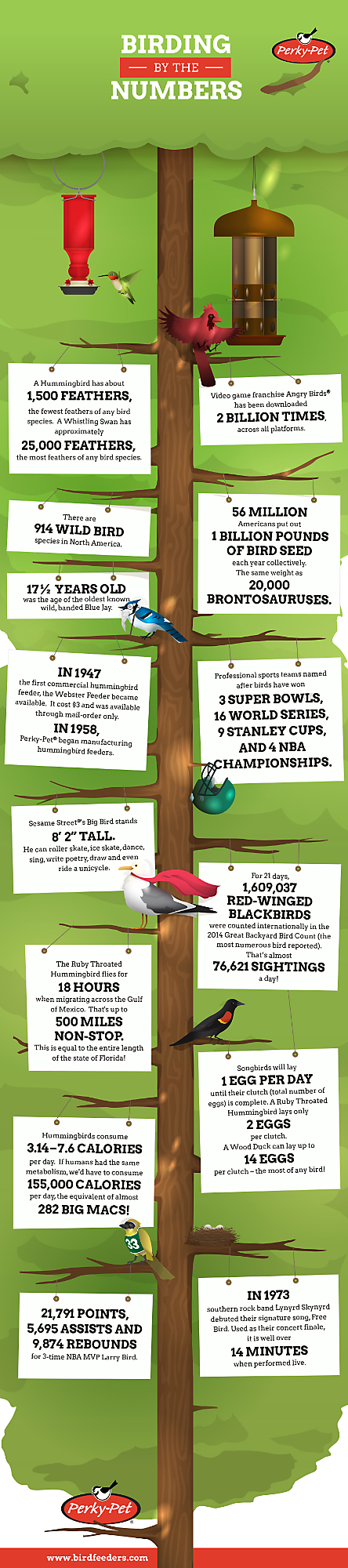 the Bird Feeding by the Numbers infographic shows a variety of bird facts