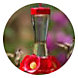 types of hummingbird feeder, choosing a hummingbird feeder