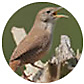 House Wren, wild bird Library, wild bird feeders for house wrens