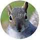 Squirrels 101, All About Squirrels