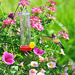 Perky-Pet® Planter Box Plastic Hummingbird Feeder with Hanger