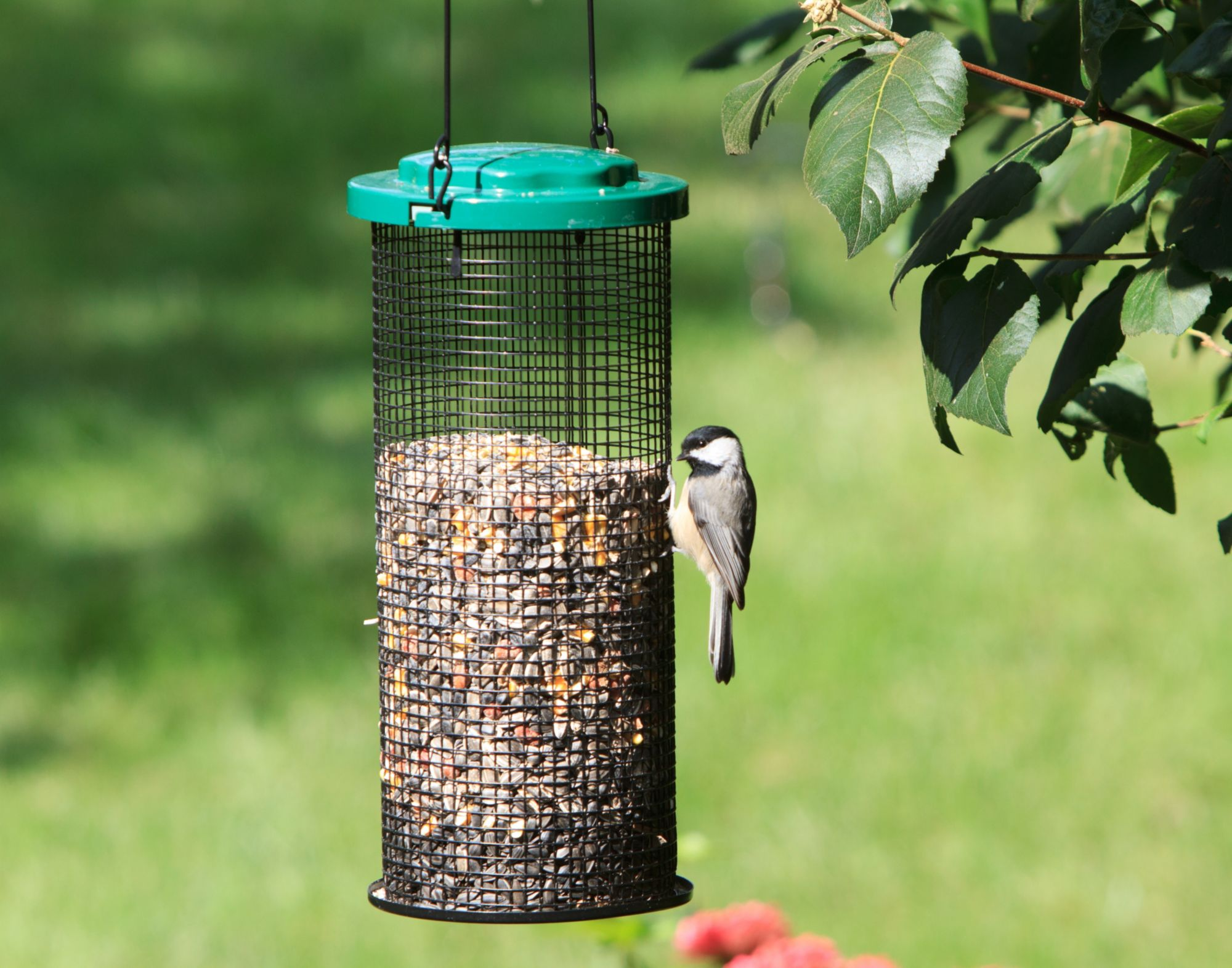 Perky-Pet® Sunflower Mesh Bird Feeder
