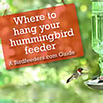 Placing Your Hummingbird Feeder