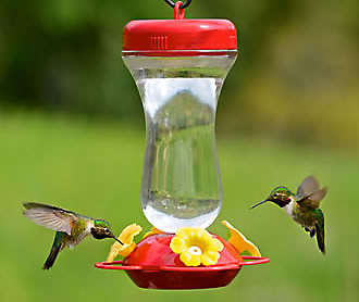 131TF Hummingbird Feeder