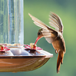 Types of Hummingbird Food