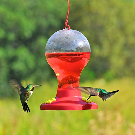 Red Color Attracts Hummingbirds