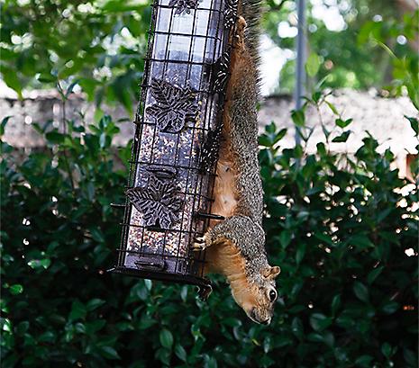 Resists Squirrels