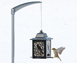 Perky-Pet® Birds & Berries Lantern Feeder