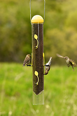Perky-Pet® All-In-One Finch Feeder