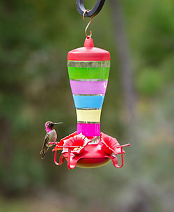 Perky-Pet® Colorful Stripes Glass Hummingbird Feeder