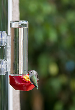 Garden Song® Window Mounted Glass Hummingbird Feeder