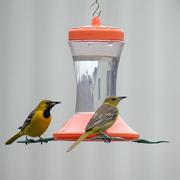 Perky-Pet Oriole Feeder