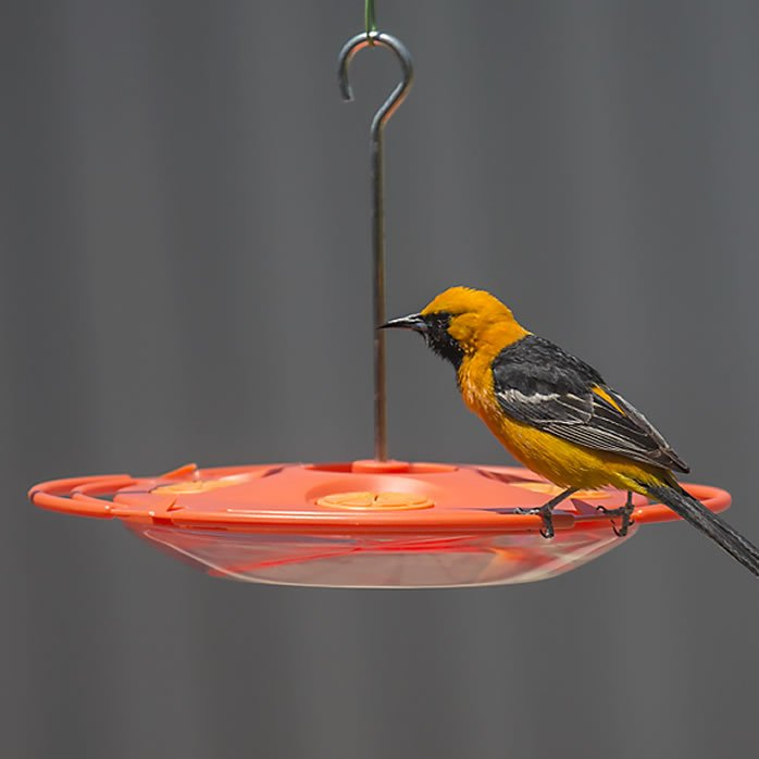 Perky-Pet Tray Oriole Feeder