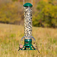 Perky-Pet® Squirrel Slammer Wild Bird Feeder