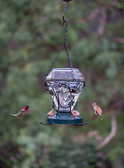 Birdscapes® Hummingbird Edition Glass Hummingbird Feeder