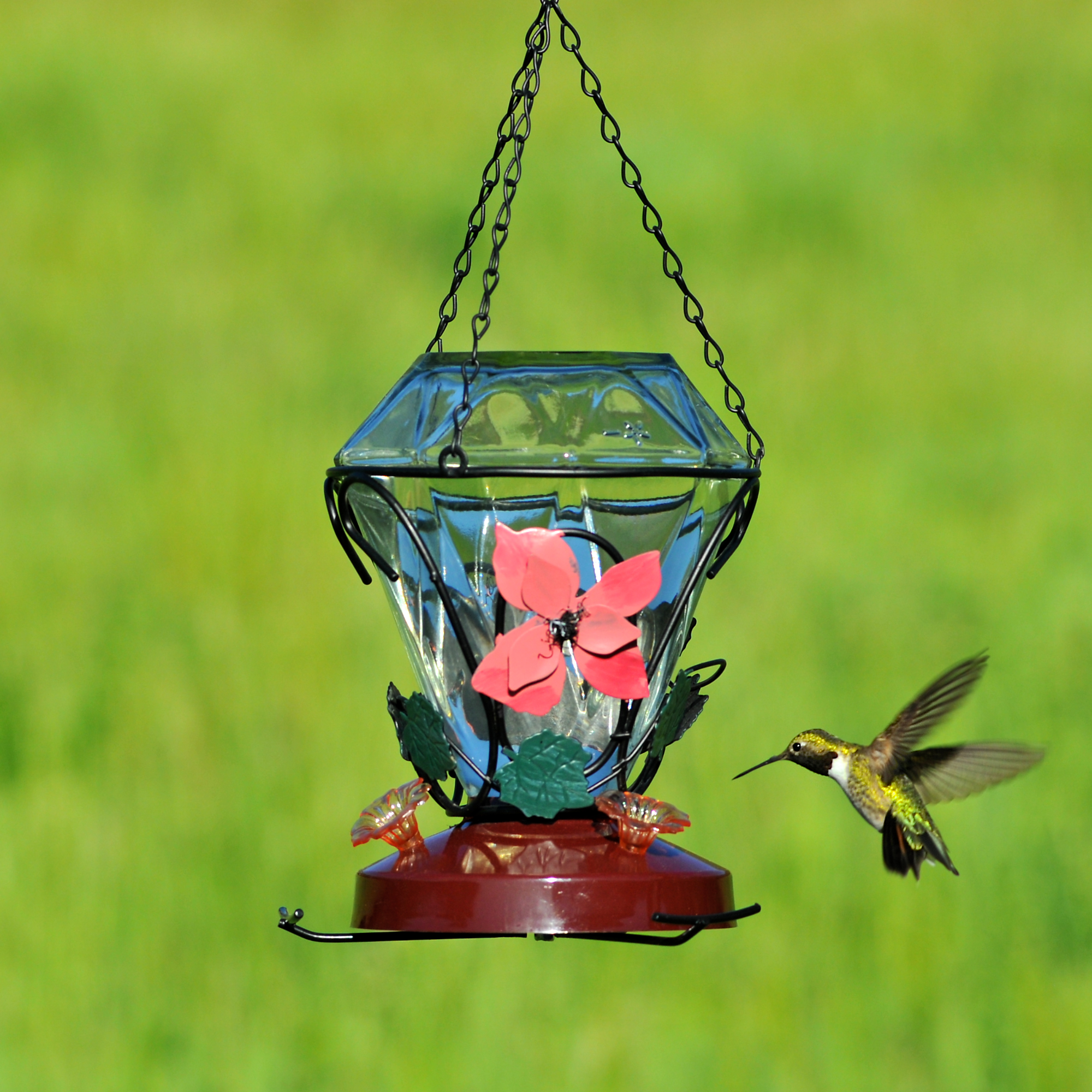 Birdscapes® Blossom Edition Glass Hummingbird Feeder