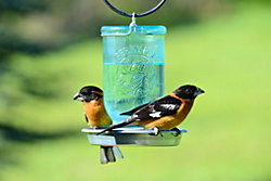 Droplet Bird Waterer