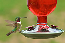 Perky-Pet® Antique Bottle Glass Hummingbird Feeder