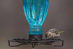 Perky-Pet® Daisy Vase Vintage Bird Waterer