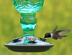 Green Antique Glass Hummingbird Feeder Kit