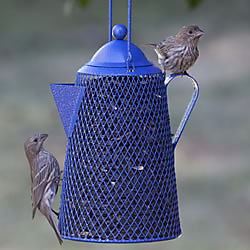 NO/NO® Coffee Pot Wild Bird Feeder
