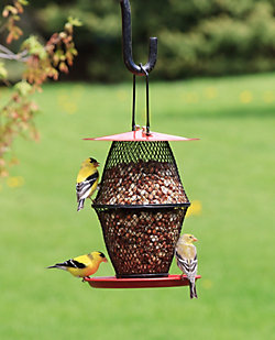 Lyric® Woodpecker Bird Seed & NO/NO® Lantern Wild Bird Feeder Bundle