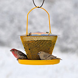 No/No Designer Single with Tray Wild Bird Feeder