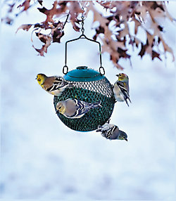 NO/NO® Green Seed Ball Wild Bird Feeder