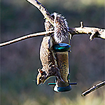 Squirrel Proof Your Yard