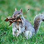 About Squirrel Nests