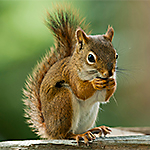Squirrel Resistant Bird feeders