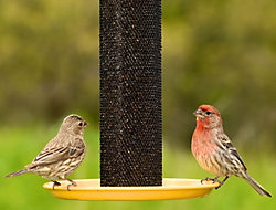 NO/NO® Straight-Sided Finch Tube Feeder