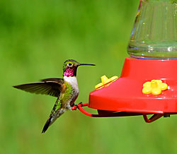 Buy 3 Get 1 FREE - Perky-Pet® Pinch-Waist Glass Hummingbird Feeder with FREE Nectar