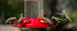 Buy 3 Get 1 FREE -  The Grand Master Hummingbird Feeder
