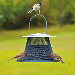 Wild Bird Feeders - Expert Tips
