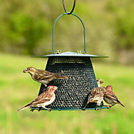 NO/NO® Original Forest Green Wild Bird Feeder