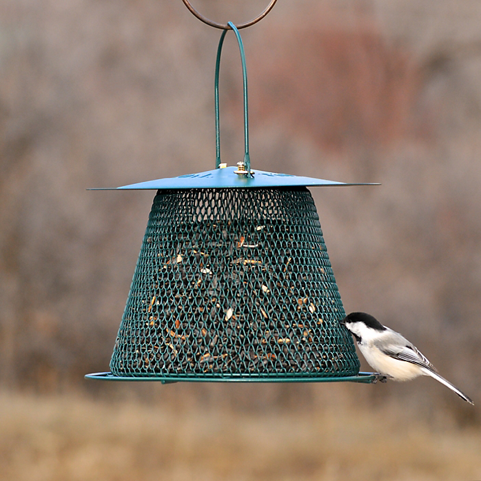 Hang a Feeder and They Will Come?