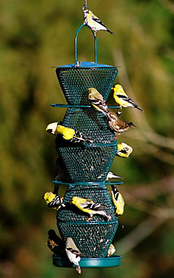 NO/NO® 5 Tier Forest Green Wild Bird Feeder