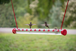 Perky-Pet® Hummerbar® Hummingbird Feeder—2 ft