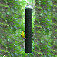 "Perky-Pet® 16"" Metal Finch Feeder"