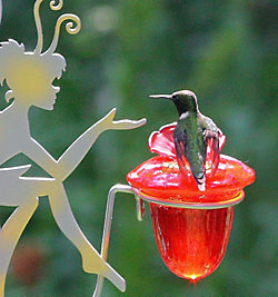 Avant Garden® Fairy Dust Glass Hummingbird Feeder
