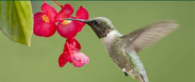 Hummingbirds 101