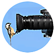 Bird Watching Spotting Scopes