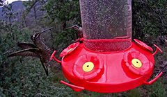 Perky-Pet Hummingbird Feeder Cam