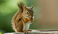 Squirrel Resistant Feeders