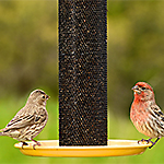 Perky-Pet® Straight-Sided Finch Feeder